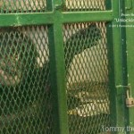 Lawsuit Filed on Behalf of Chimpanzee Seeking Legal Personhood