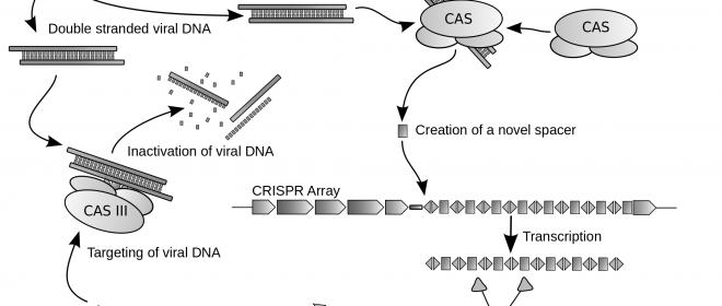 A CRISPR in your Future
