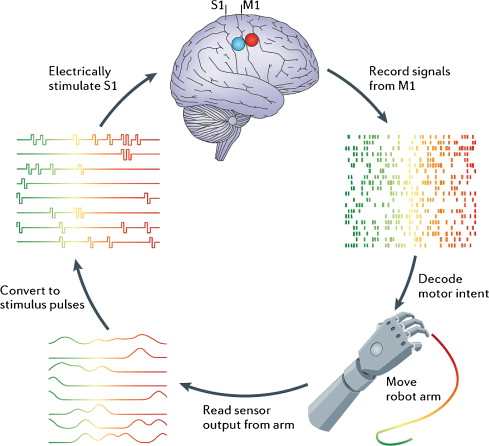 DARPA-funded Efforts in the Development of Novel Brain–Computer Interface Technologies - h+ Media