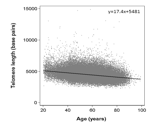 Telomere Length and Mortality - Danish Study of 65,000 People - h+ Media