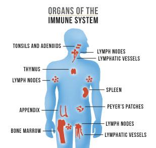 immune-system101-2-1