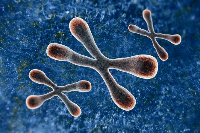telomeres via shutterstock